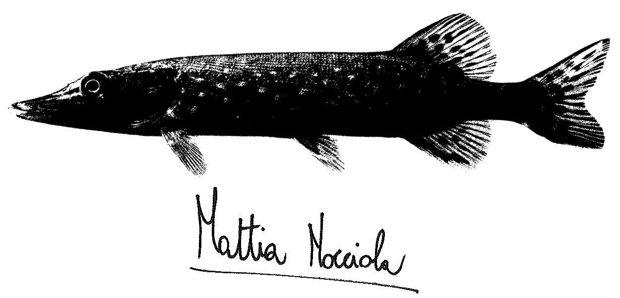 Mattia Nocciola